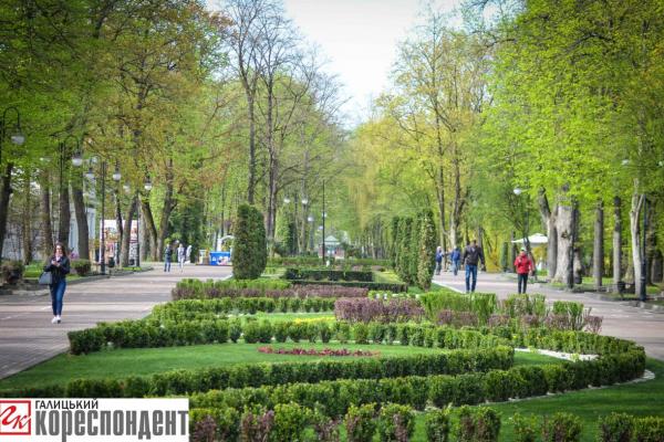 У Франківську літня жінка зрізає троянди в парку