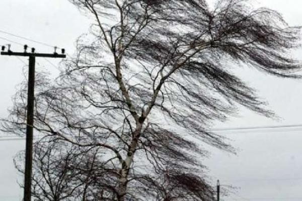 На Франківщині сильний вітер повністю знеструмив три села