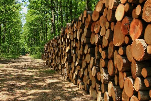 Розслідування: Як на Франківщині замовлення від лісгоспів отримують родичі лісівників